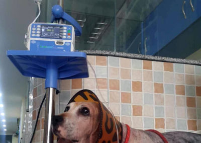 Patsy being treated at the vet in Guangzhou
